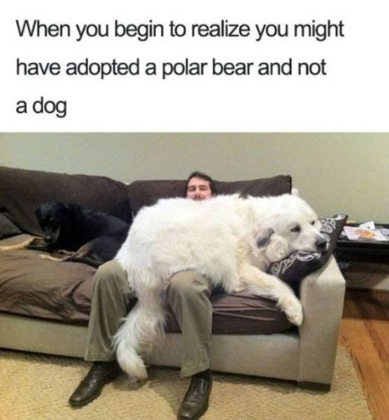 dog meme - Facial expression - When you begin to realize you might have adopted a polar bear and not a dog