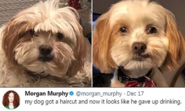 dog meme - Dog - Morgan Murphy @morgan_murphy Dec 17 my dog got a haircut and now it looks like he gave up drinking.