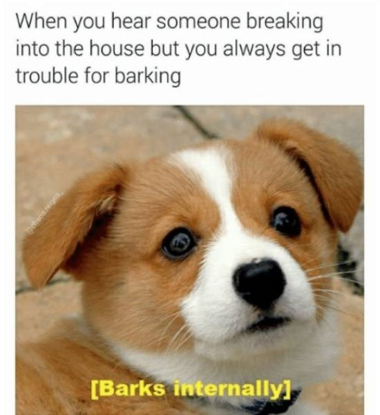dog meme - Dog - When you hear someone breaking into the house but you always get in trouble for barking [Barks internally] edtac re