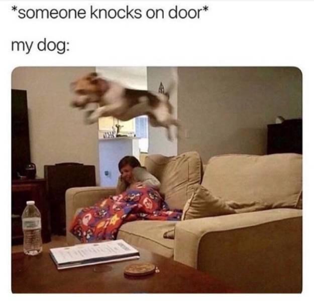 dog meme - Text - *someone knocks on door* my dog: