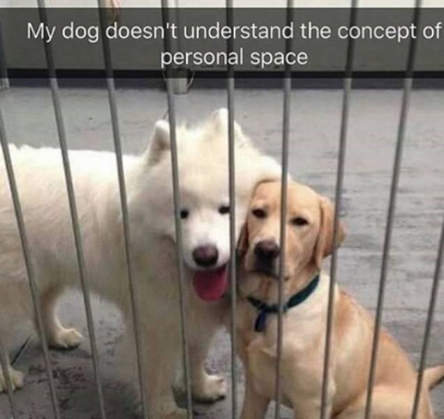 dog meme - Dog - My dog doesn't understand the concept of personal space