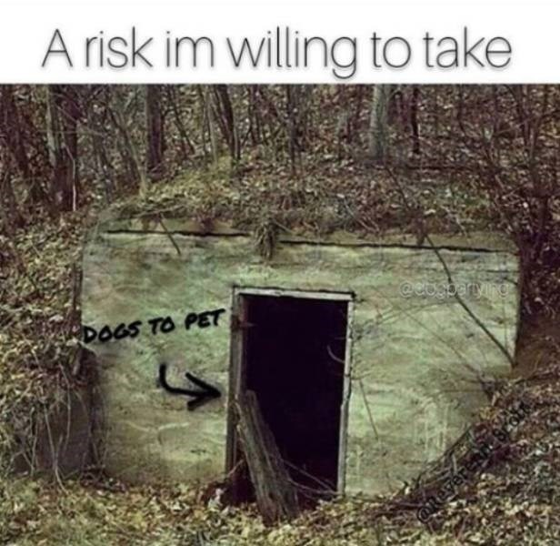 dog meme - Text - A risk im willing to take @eUSIarying DOGS TO PET