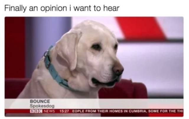 dog meme - Mammal - Finally an opinion i want to hear BOUNCE Spokesdog 86C NEWS 15:27 EOPLE FROM THEIR HOMES IN CUMBRIA, SOME FOR THE THI