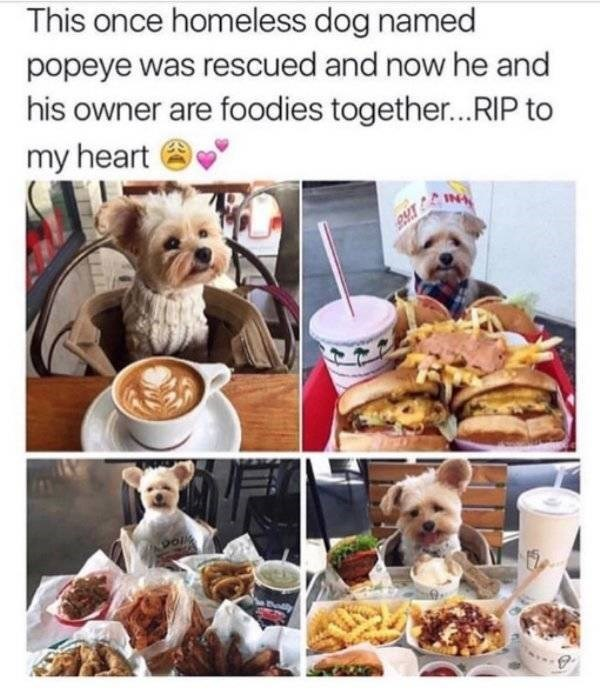 dog meme - Companion dog - This once homeless dog named popeye was rescued and now he and his owner are foodies together...RIP to my heart INA