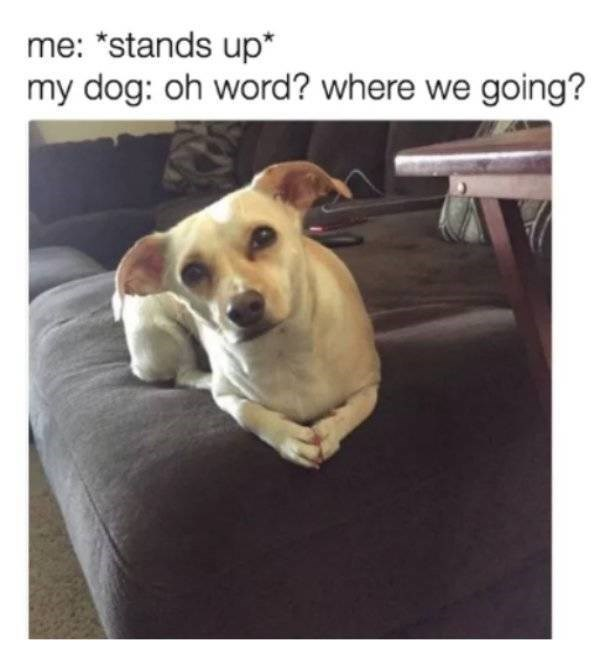 """dog meme - Dog - me: """"stands up* my dog: oh word? where we going?"""