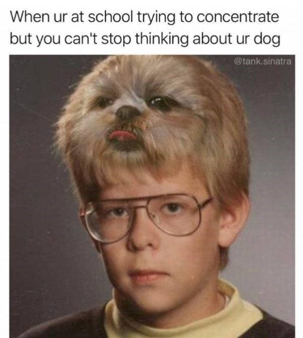 dog meme - Hair - When ur at school trying to concentrate but you can't stop thinking about ur dog @tank.sinatra