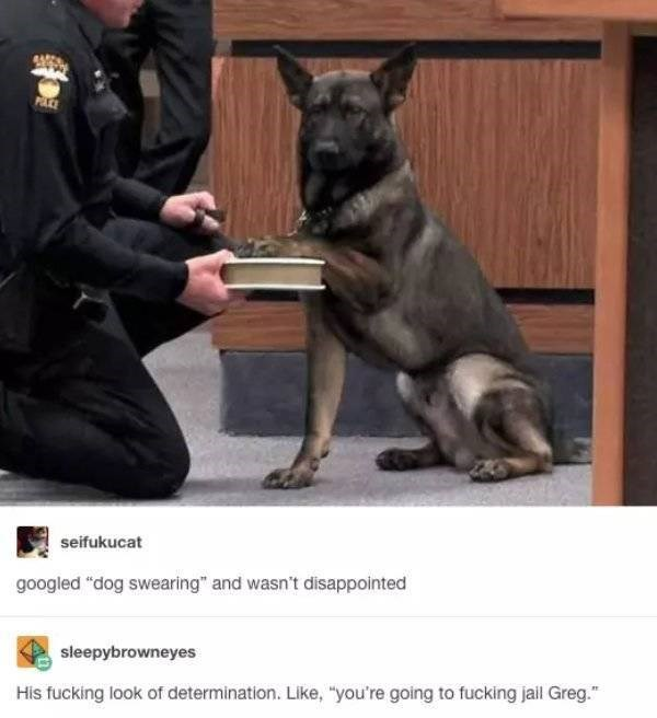 "dog meme - Vertebrate - seifukucat googled ""dog swearing"" and wasn't disappointed sleepybrowneyes His fucking look of determination. Like, ""you're going to fucking jail Greg."""