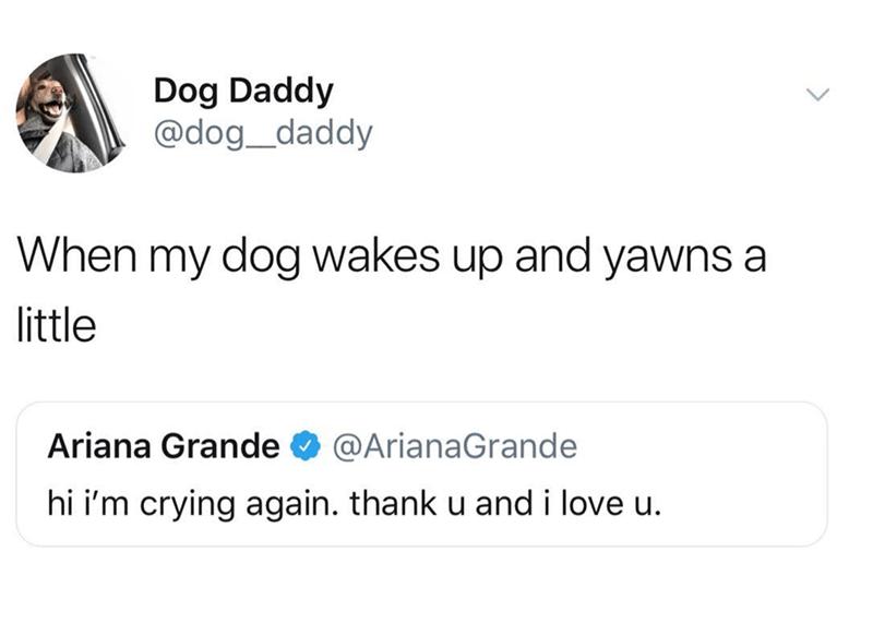 dog meme - Text - Dog Daddy @dog_daddy When my dog wakes up and yawns a little Ariana Grande @ArianaGrande hi i'm crying again. thank u and i love u.