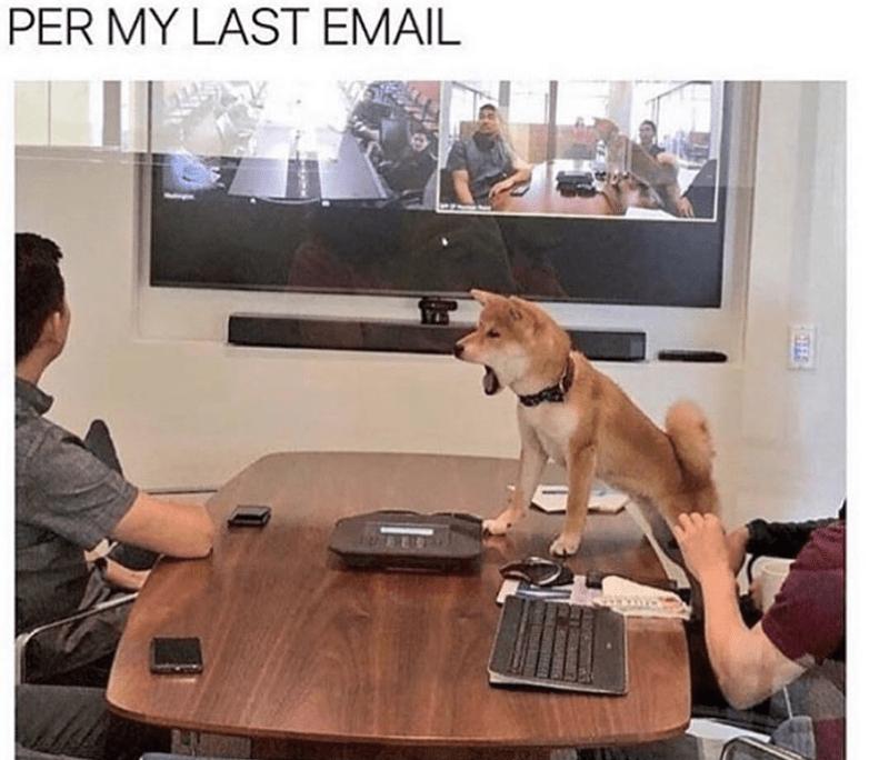dog meme - Dog - PER MY LAST EMAIL