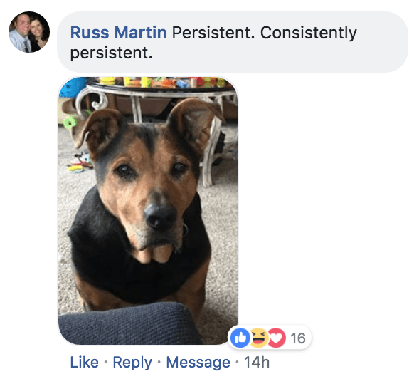 Dog - Russ Martin Persistent. Consistently persistent. Like Reply Message 14h