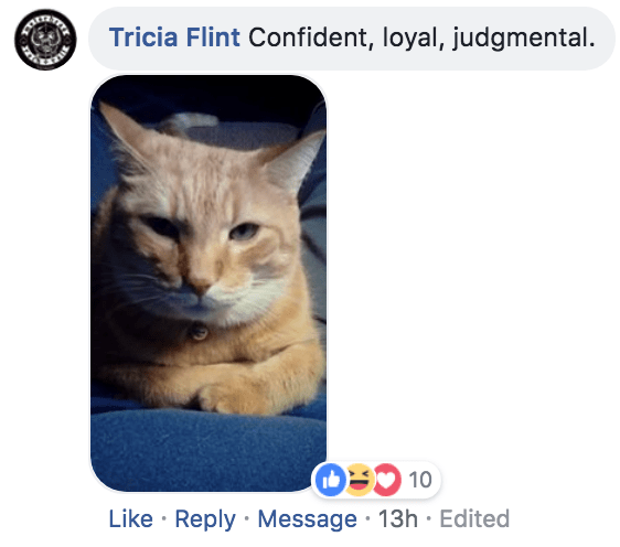 Cat - Tricia Flint Confident, loyal, judgmental. 10 Like Reply Message 13h Edited