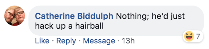 Text - Catherine Biddulph Nothing; he'd just hack up a hairball 7 Like Reply Message 13h