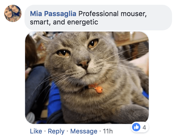 Cat - Mia Passaglia Professional mouser, smart, and energetic 4 Like Reply Message 11h