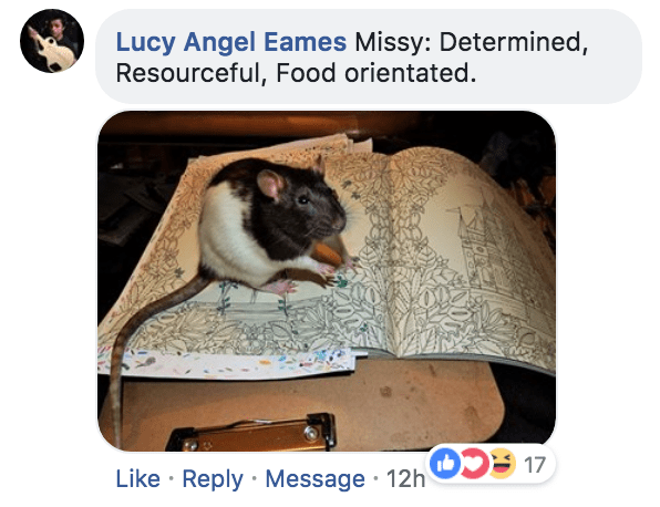 Rat - Lucy Angel Eames Missy: Determined, Resourceful, Food orientated. 17 Like Reply Message 12h