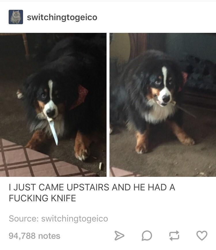 surprise doggo doggo memes - 9236806144