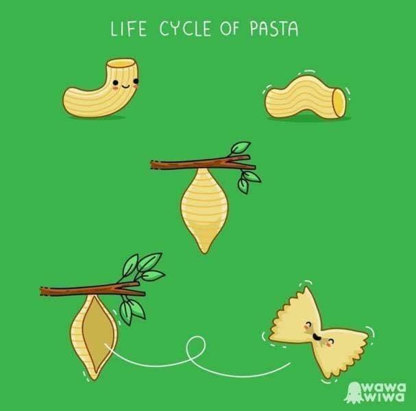 meme - Leaf - LIFE CYCLE OF PASTA wawa WIWA