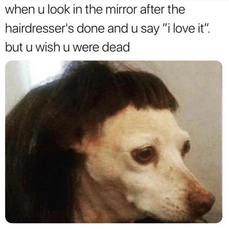 """Caption that reads, """"When you look in the mirror after the hairdresser's done and you say 'I love it' but you wish you were dead"""" above a pic of a little dog wearing an ugly wig"""