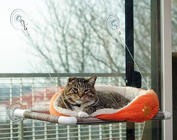 amazon cat window perch