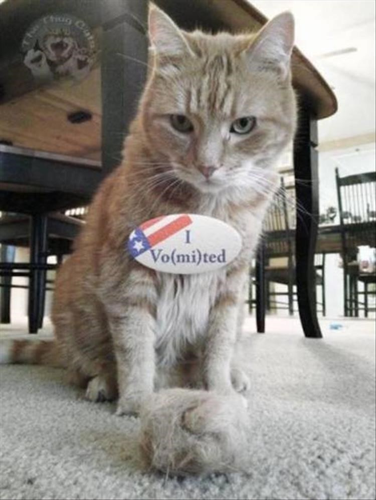 """Caturday meme of a cat wearing an """"I voted"""" badge changed into """"I vomited"""""""