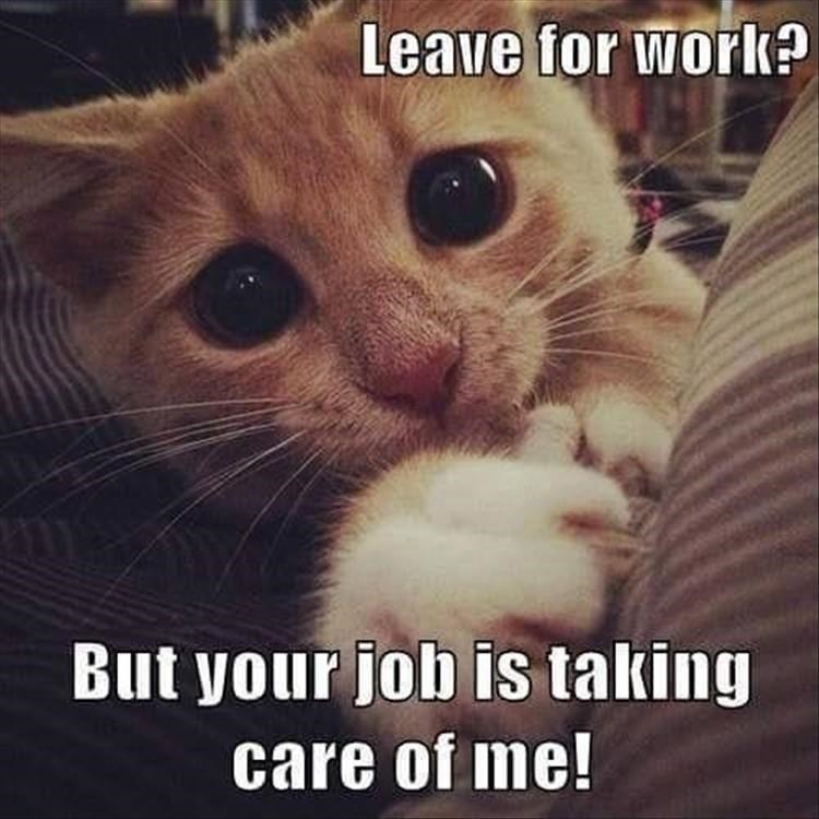 Caturday meme of a teary eyed cat not wanting you to go to work