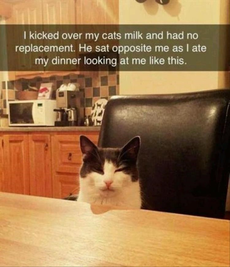 Caturday meme of an angry cat watching owner during dinner