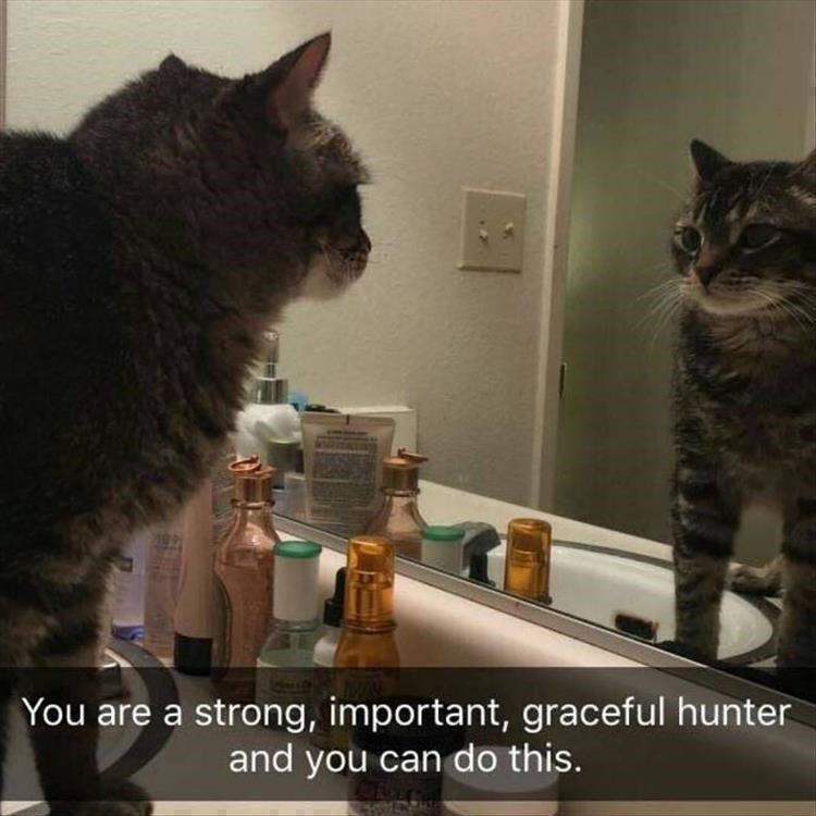 Caturday meme of a cat looking in the mirror giving itself a pep talk