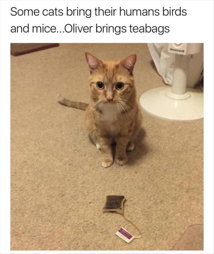 Caturday meme about a cat bringing his humans teabags as gifts