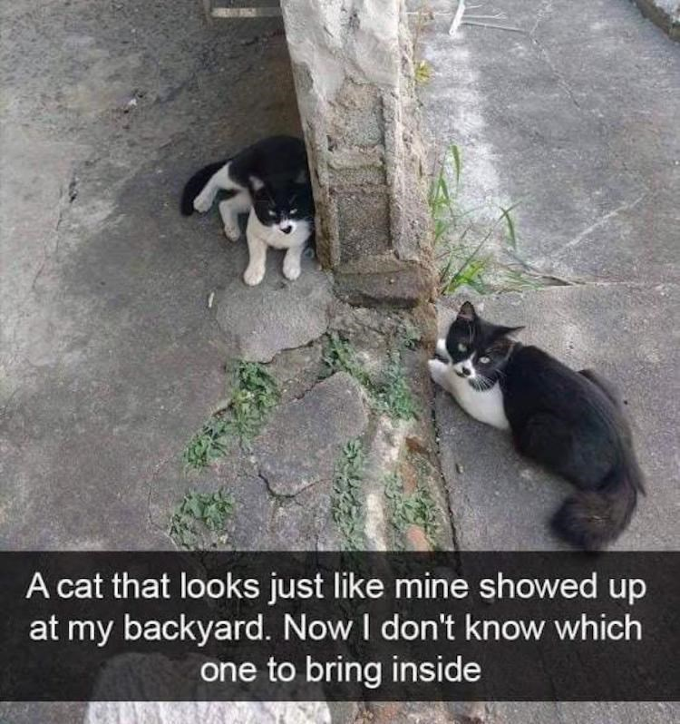 Caturday meme about finding your cat's long lost twin