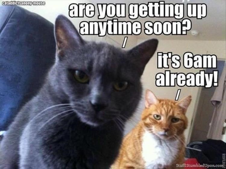 Caturday meme about cats waking their owners early