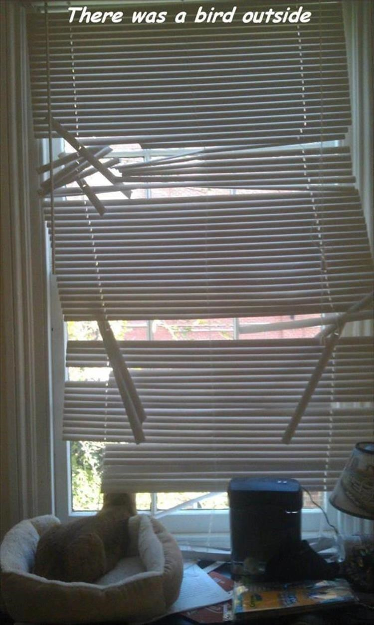 Caturday meme of broken window blinds after a cat had ruined them