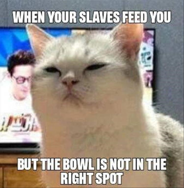 Caturday meme about cats seeing their humans as slaves
