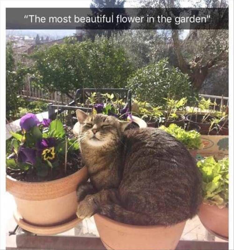 Caturday meme of a cat in a flowerpot