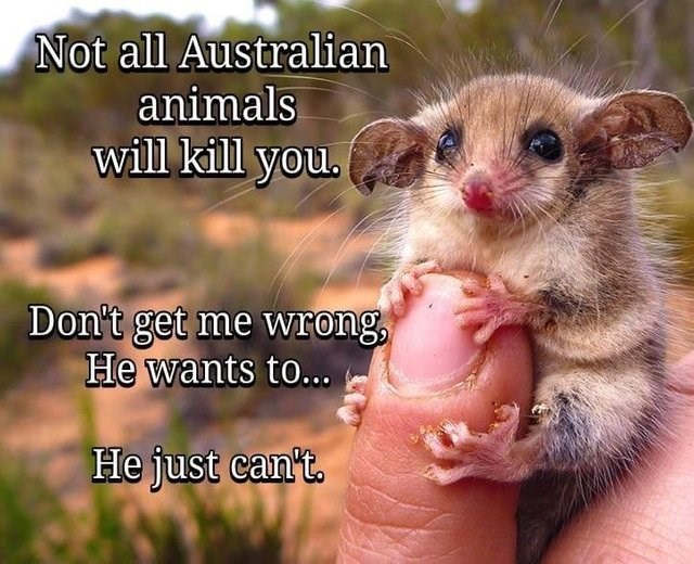 australia funny animals - 9237330944