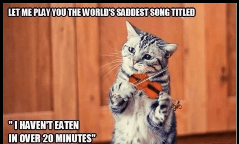 meme of a cat playing the violin