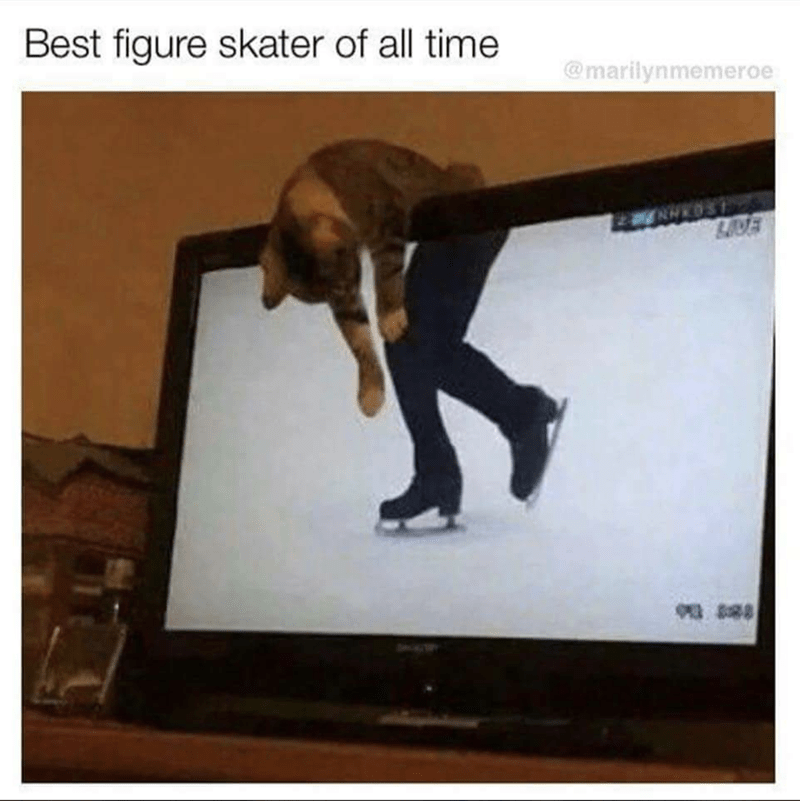 cat meme sitting over a screen showing a figure skater