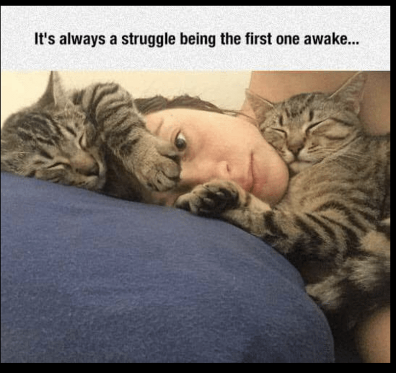 meme of cats hugging their owners face