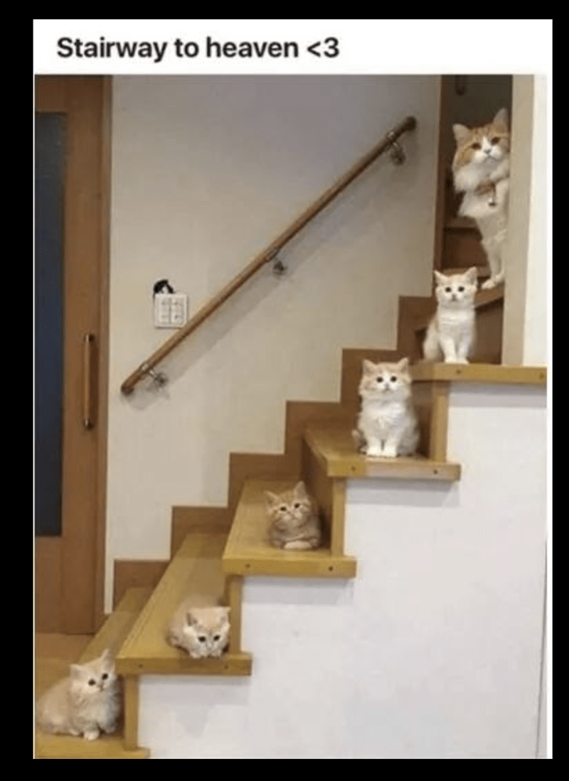 meme of cats sitting on each staircase