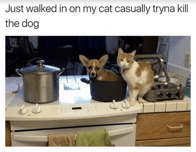meme of a cat and dog sitting on top of a kitchen counter