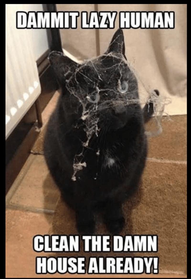 meme of a cat caught up in a tangle of dust