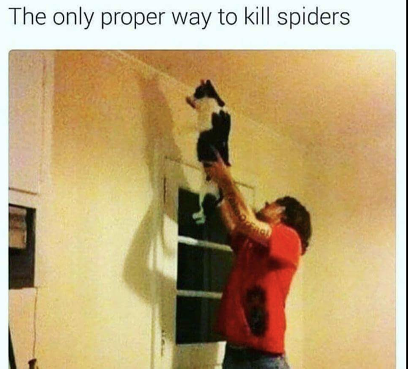 meme of a cat being help up by it's owner to kill spiders