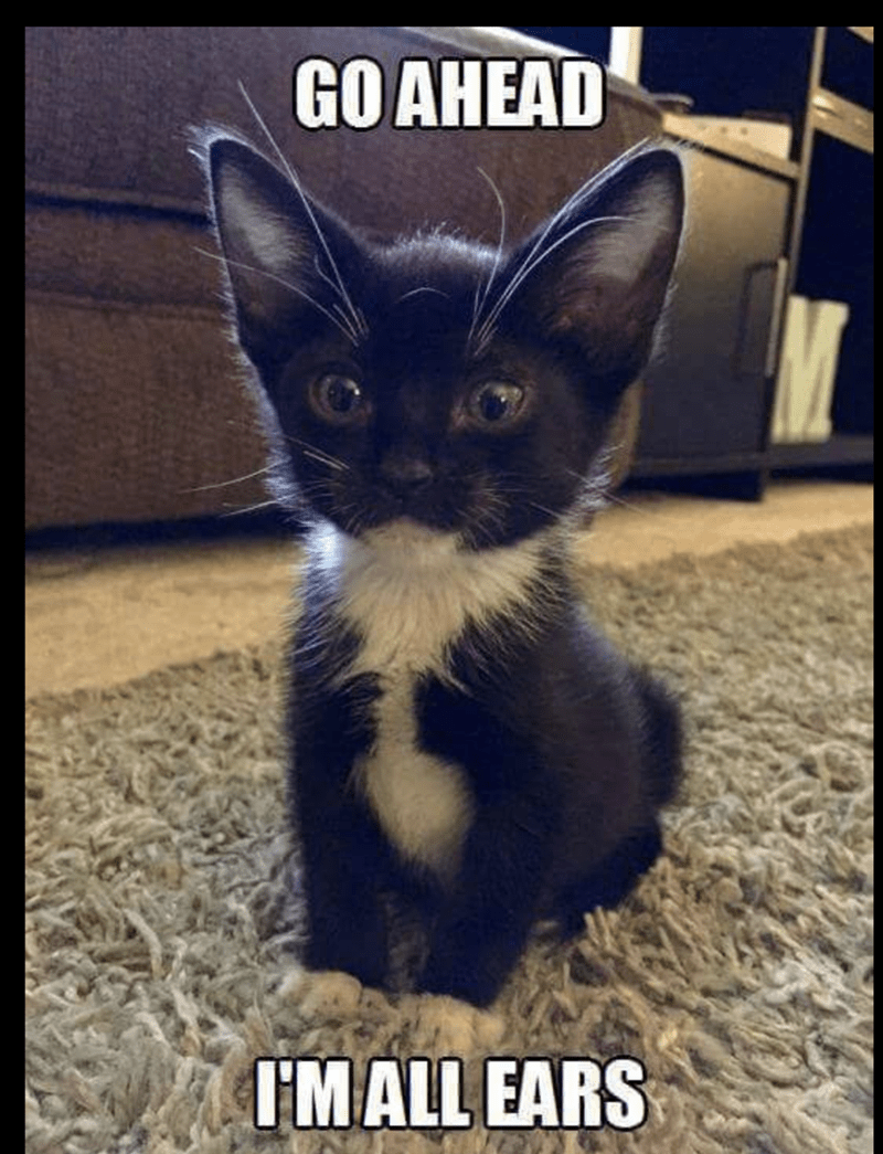 meme of a kitten that has extremely large ears