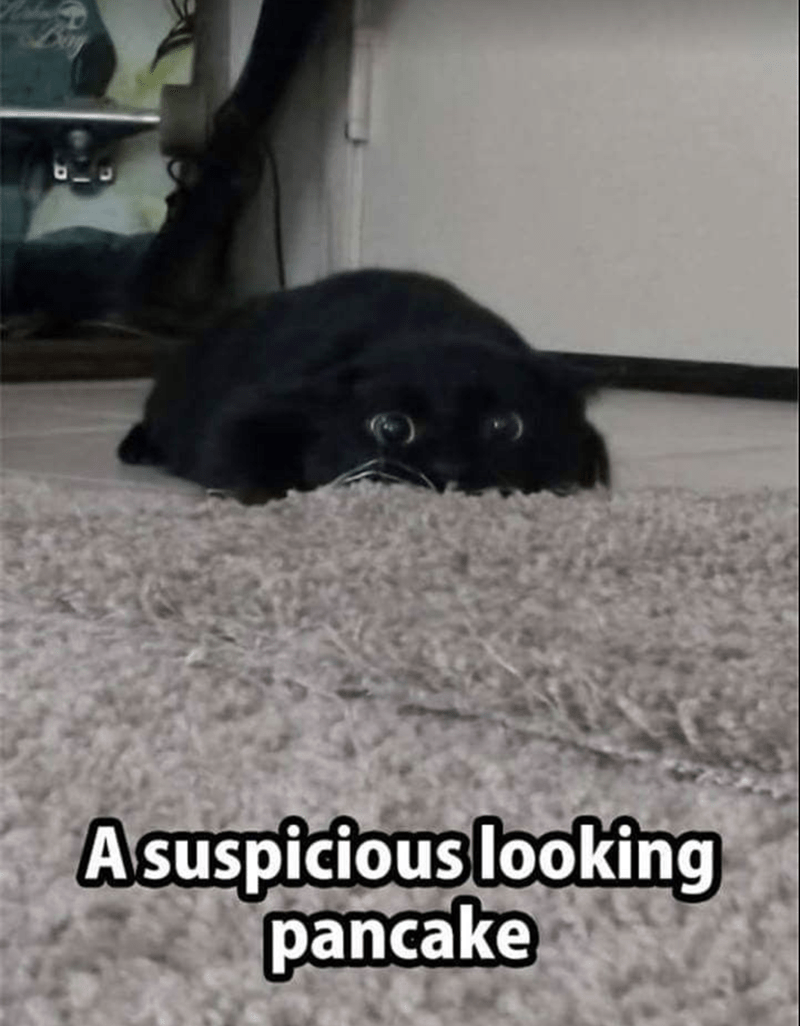 meme of a cat that is laying flat on the floor