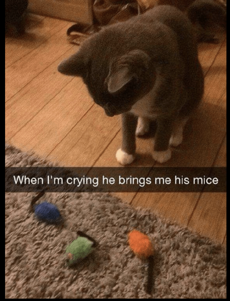 pic of a cat bringing his toys to his owner when the owner is crying