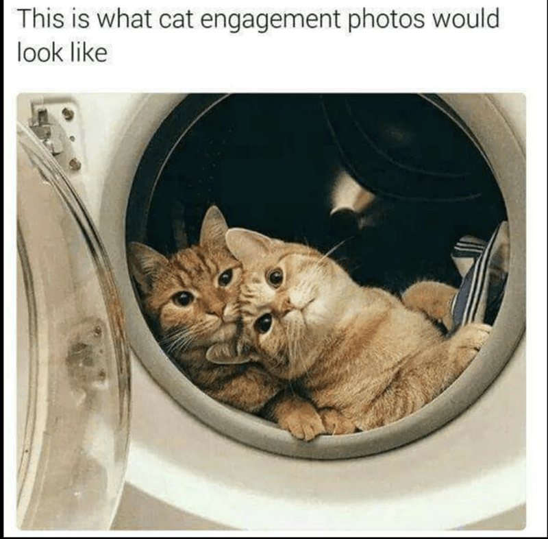 "Caption that reads, ""This is what cat engagement photos would look like"" above a pic of two cats cuddling inside of a dryer"