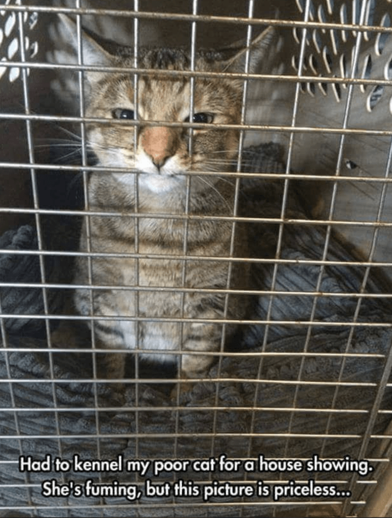 meme of a cat sitting inside a cage and sticking its nose through the holes