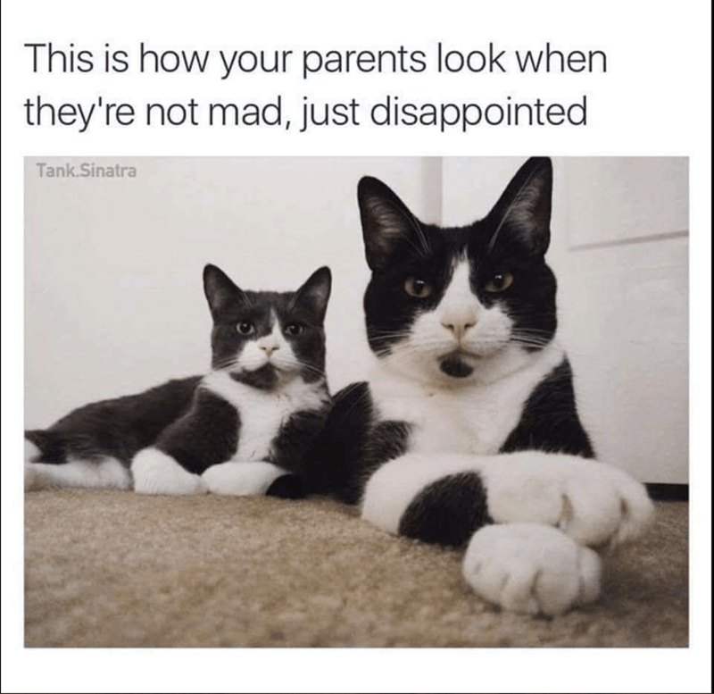 meme of a cats looking disappointed and crossing their paws