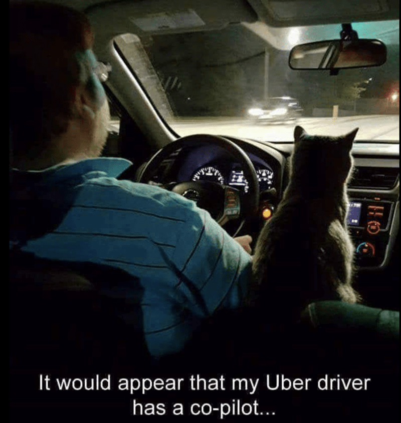 meme of a cat sitting next to an uber driver