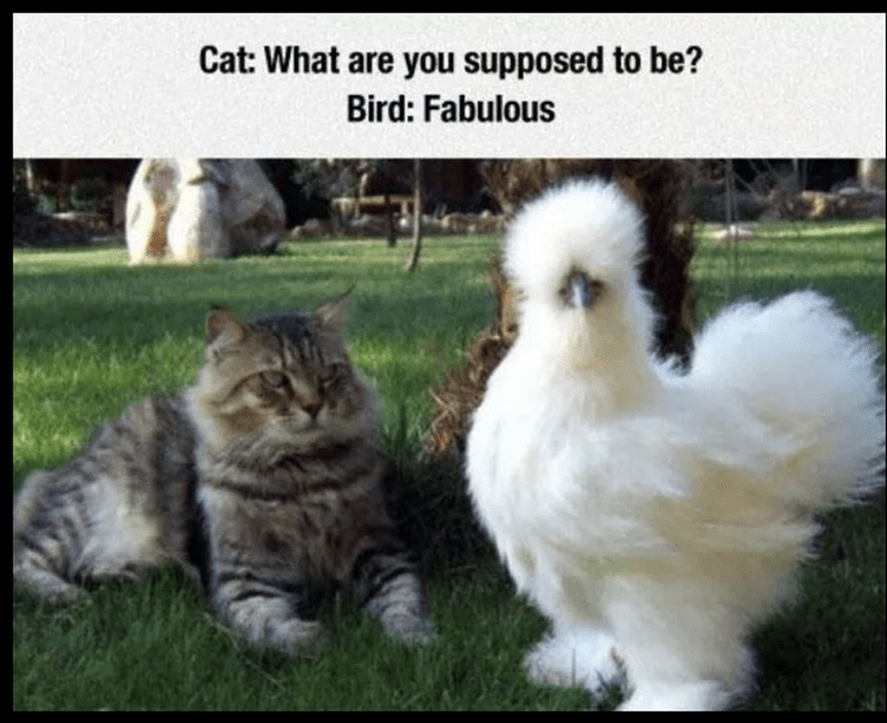 meme of a cat and bird sitting next to each other on the grass
