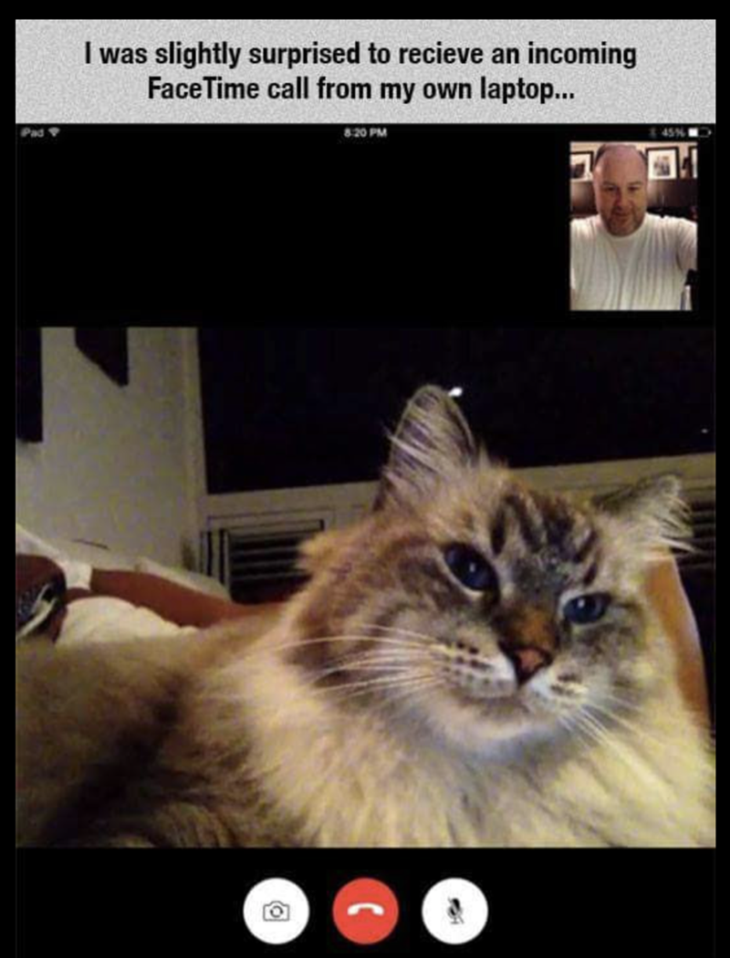 meme of a cat that is face timing its owner from his computer to his phone