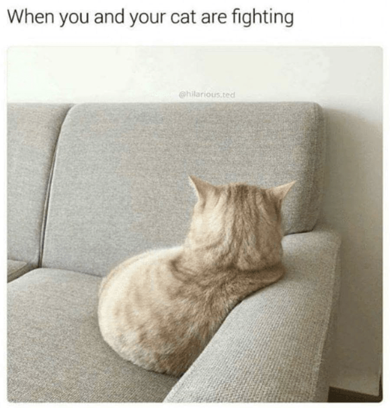 meme of a cat sitting on a sofa with its head and back turned away